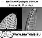 Test slide Gyrosigma balticum